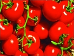 الأسبرين لعلاج الطماطم