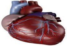 تعرف على علاقة الصيام بصحة القلب
