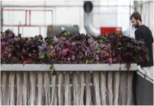 جزيئات دفاعية من النبات لعلاج الأمراض