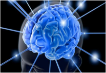 لماذا توجد ثنيات في دماغ الإنسان؟