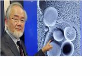 نوبل للطب لمكتشف آليات تجدد الخلايا.. فمن هو وكم أخذ؟