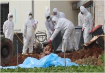 استعانة كوريا الجنوبية بالجيش على إنفلونزا الطيور