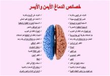 حقائق عن الدماغ