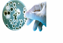 معركة الالتهاب تحت عدسة المجهر