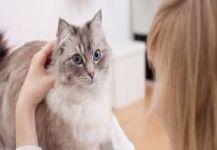 """""""طفيلي القطط"""" يهدد الملايين حول العالم بانفصام الشخصية!"""