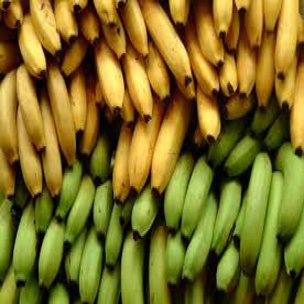 أيهما أفضل الموز الأخضر أم الأصفر؟