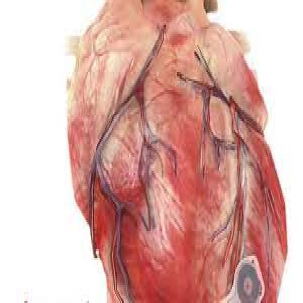 جهاز لتنظيم ضربات القلب دون بطارية
