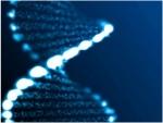 """العلماء يتوصلون لـ""""خارطة طريق"""" للجينوم البشري"""